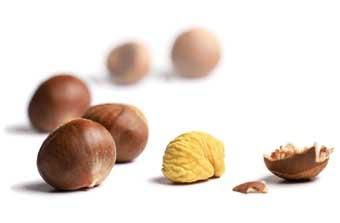 Zdraví z ořechů