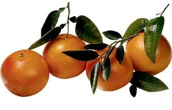 Grapefruit odbourává tuk