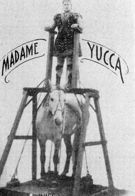 Madame Yucca