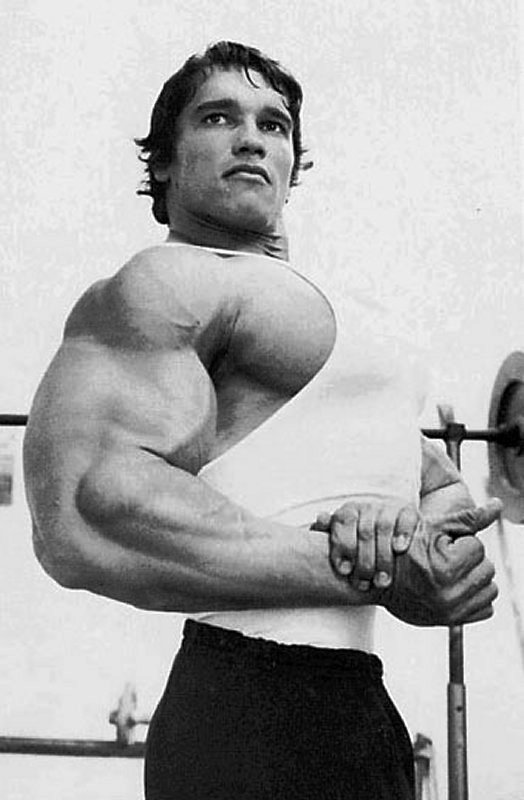ARNOLD 04
