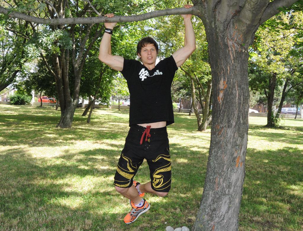 Zhyby na strome