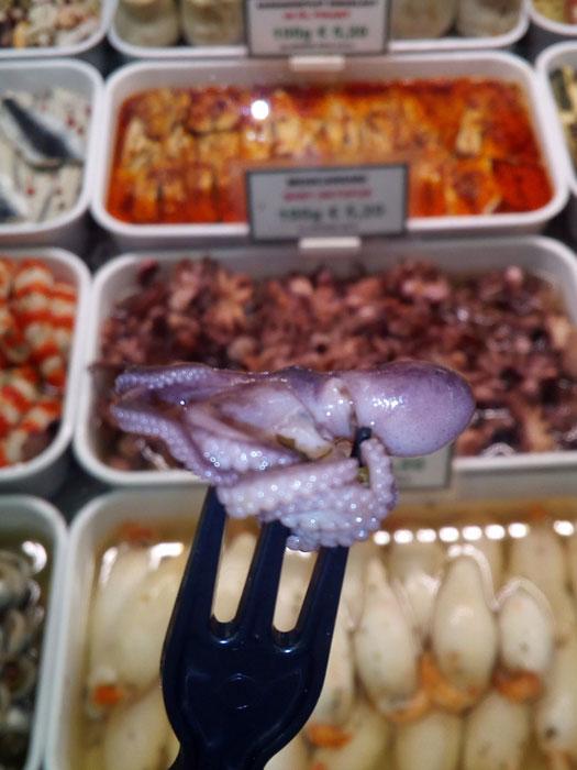 Blog Baby octopus