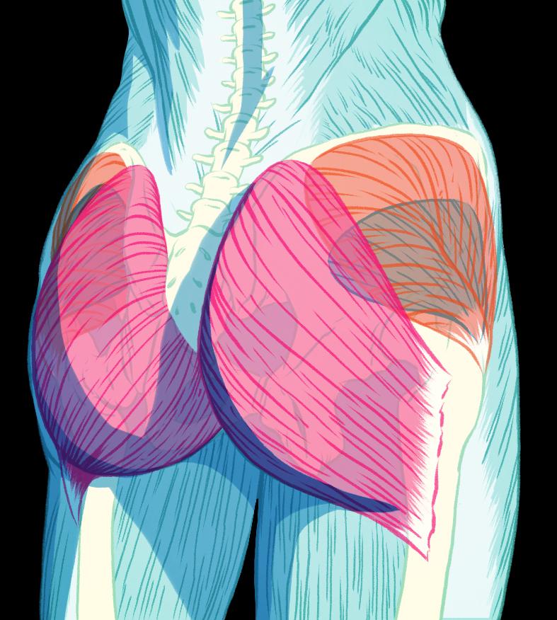 foto Vše osedacích svalech